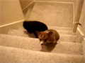 Dog Helps Puppy Up the Stairs video