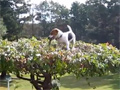 Little Dog Climbs Up A Tree for a Stick video