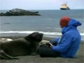 Seal Just Want to Cuddle video