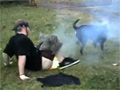 Dog Attacks Firecracker in Kid